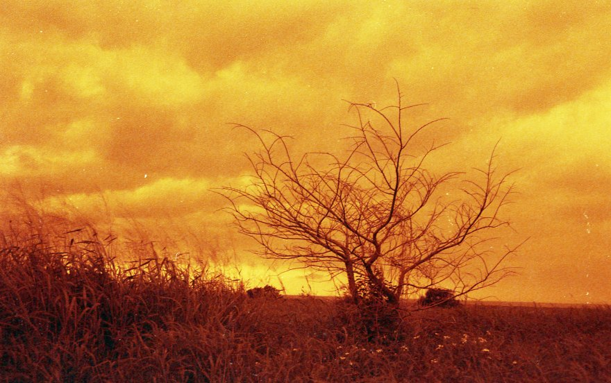 [FILM] TAIWAN - US tamsui street yongle DEC2016 Nikon FM(S) - Rollei Redscale 400 -006
