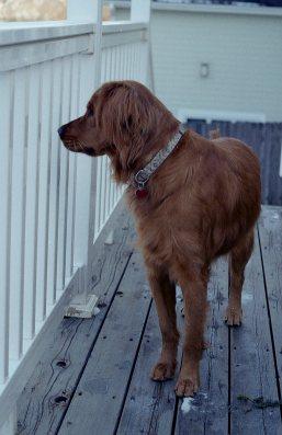 [FILM] USA christmas DEC2016 - Nikon FM (s) - Kodak Gold 200 -017