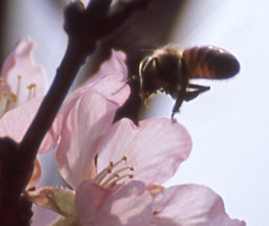 noise bee